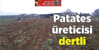 Patates üreticisi dertli