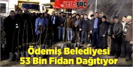 Ödemiş Belediyesi 53 Bin Fidan Dağıtıyor
